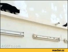 Cat Sewing Funny Gif #18310 - Funny Cat Gifs|Funny Gifs|Cat Gifs