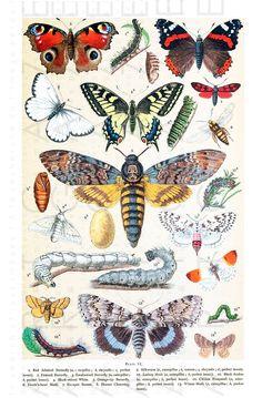 Vintage Art Prints, Antique Prints, Graphic Design Print, Graphic Prints, Decoupage, Antique Illustration, Illustration Fashion, Digital Illustration, Insect Art