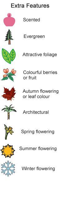 Climbing plants for east-facing,  north-facing & south-facing walls