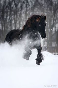 Black horse in the snow.Love horses and this is so awesome! All The Pretty Horses, Beautiful Horses, Animals Beautiful, Beautiful Images, Stunningly Beautiful, Absolutely Stunning, Horses In Snow, Black Horses, Wild Horses