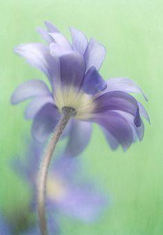 blue flower-so pretty