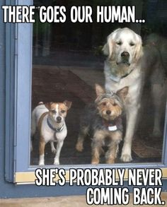 There goes our human.... #love #familydogs #cute
