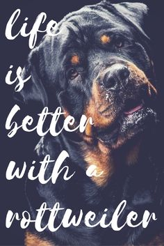 See more at https://mypupboutique.com/collections/rottweiler  #Rottweiler