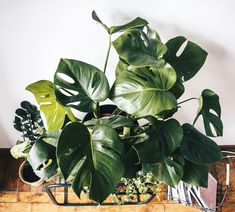 Monstera Deliciosa, Houseplants, Plant Leaves, Indoor House Plants, Potted Plants