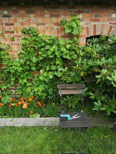 Stepping Stones, Outdoor Decor, Plants, Home Decor, Stair Risers, Decoration Home, Room Decor, Plant, Home Interior Design