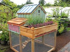Chicken coop garden combo. Great way to maximize space.