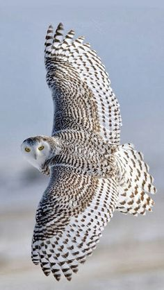 Gliding...