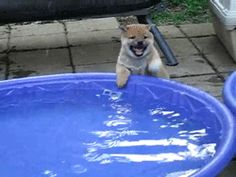 http://puppypu.tumblr.com/