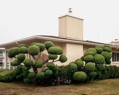 A Photographical Trip to California Via Its Gardens – Fubiz Media