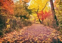 Central Park Autumn: Take a walk through Central Park's Ramble. With over 80 acres of natural woodland, this is the spot to get lost in during the autumn when the leaves are changing color.