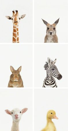 would be so adorable for a nursery or kids room. Love love love the simplicity of them.These would be so adorable for a nursery or kids room. Love love love the simplicity of them. Baby Zoo, Cute Baby Animals, Animals And Pets, Zoo Animals, Rainforest Animals, Animals Photos, Funny Animals, Animal Print Shop, Animal Prints