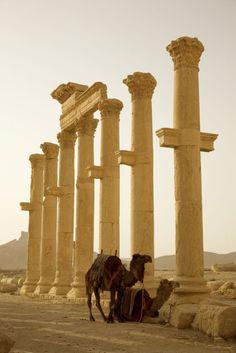 Palmyra, Syrië