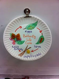 life cycle of a butterfly using dry noodles
