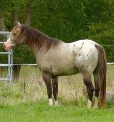 I am not normally an Apaloosa fan, but he can come live at my house.
