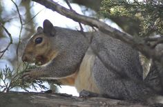 Squirrel Eating Berries by Out.of.Focus, via Flickr
