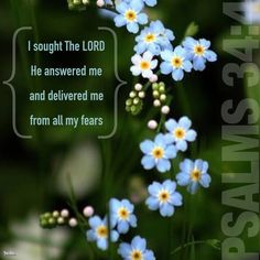 Psalms 34:4-5 I sought The LORD, and He answered me and delivered me from all my fears. Those who look to Him are radiant, and their faces shall never be ashamed.  #InstaEncouragements #instagood #wisdomwords #photooftheday #instadaily #FF #FollowFriday #FridayReads