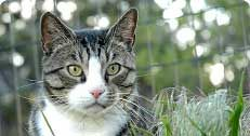 Can you serve as a resource for people helping feral cats in your community? If you've got a skill or talent that can help cats, we want you!  Join our Feral Friends Network: http://www.alleycat.org/FeralFriends