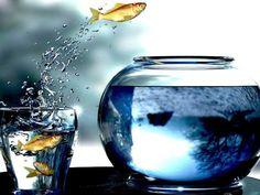 .splash