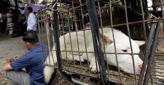 """Cina, attivisti al Festival della carne di cane: """"Abbiamo comprato oltre 200 animali"""""""