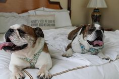 20 (plus) Great Resorts for Getaways With Your Pets | Travel Channel