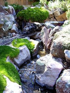river, rocks, ground cover - nice!