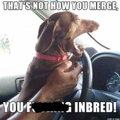Road Rage Memes Are The Best (21 pics) | The Blended Fun