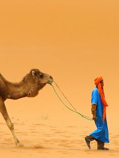 Camel and Camel Driver in Erg Chebbi, Morocco