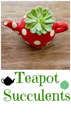 Cactus planter in a teapot - Add succulents & indoor plants to improve your home's air quality