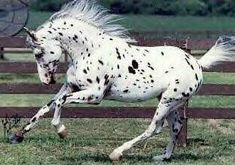 Let's pretend your big ear is a horn and you are therefore an amazing spotted unicorn!!