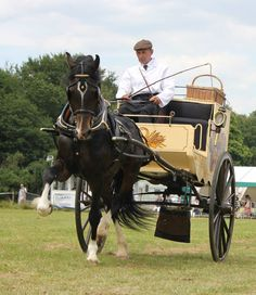 Carriage Driving Magazine -  Windsor Great Park