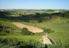 Confine col Monferrato #hills #provinciadicuneo #piemonte #italy
