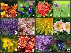 flowers that attract butterflies Butterfly Bush, Planting Flowers, Plants, Attract Butterflies, Garden, Plants That Attract Butterflies, Flowers That Attract Butterflies, Butterfly Flowers, Summer Garden