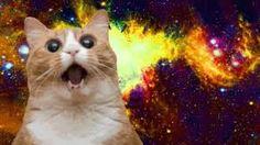 Image result for cat meme