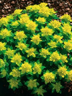 These plants can handle heat, cold, wind—on roofs, balconies and high window ledges.