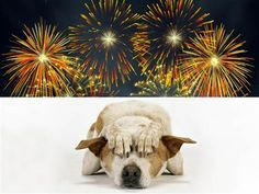 How to Keep your Pets and Street Animals Safe this Diwali Read more-> https://goo.gl/hS0epm