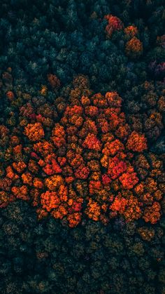 Trees peak, forest, trees, aerial view, wallpaper Source by
