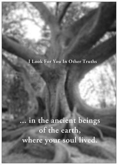 'in the ancient beings of the earth, where your soul lived.' -- I Look For You In Other Truths' by Ramon Loyola
