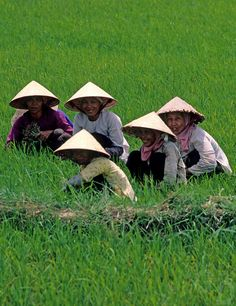 Women rice farmers in the field, Mekong Delta, Vietnam