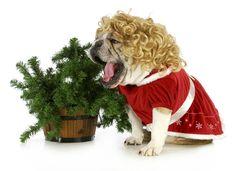 Weihnachten mit Hund Hundeblog