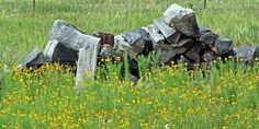 Wood Pile by beckys