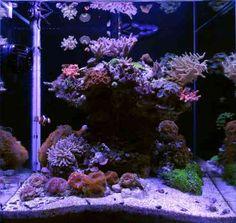 idée d'aménagement de petit aquarium