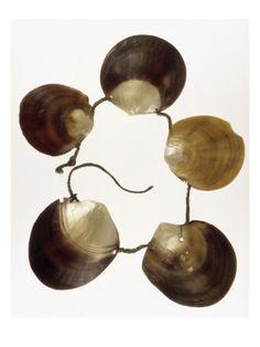 Fiji - shell necklace, scallop shells