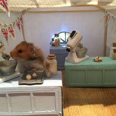Bake off is back and Max is busy in the tent. Extra Slice have chosen his picture to appear on the programme. Well done Max. Star baker this week #bakeoff #hamster #gorgeous #harcourthammies #extraslice #jobrand #starbaker #15minutesoffame #gbbo