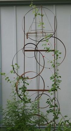 Circle trellis — would be very pretty with morning glory vine. Circle trellis — would be very pretty with morning glory vine. Wall Trellis, Metal Trellis, Vine Trellis, Garden Trellis, Trellis Ideas, Herbs Garden, Lattice Ideas, Fruit Garden, Morning Glory Vine