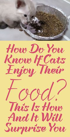 How Do You Know If Your Cat Enjoys Their Food? This is How... and It Will Surprise You!