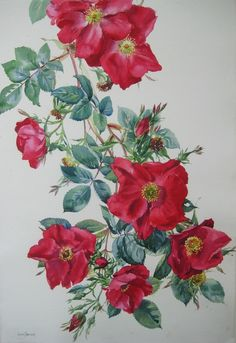 http://www.siriolsherlock.com/watercolour---flower-painting-and-still-life.html