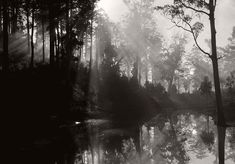 Emil Otto Hoppé Early Morning, Pemberton, Western Australia 1930 Medium silver gelatin print Copyright © 2012 Curatorial Assistance, Inc. Documentary Photographers, Great Photographers, Fine Art Photo, Photo Art, Westerns, Alfred Stieglitz, London Pictures, Global Art, Photomontage