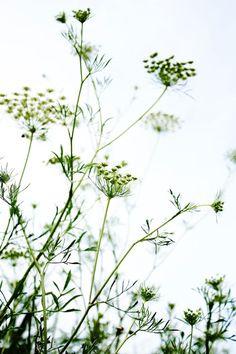 Wild flowers (salreu´s trail)