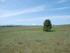 Klickitat County Real Estate | THOMPSON RD, GOLDENDALE, WA 98620 5 acres $ 49K owner carry contact or cash