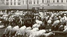 """""""Viehmarkt an der Mühlkreisstraße, fotografiert von Alois Schwarz, 1930"""""""